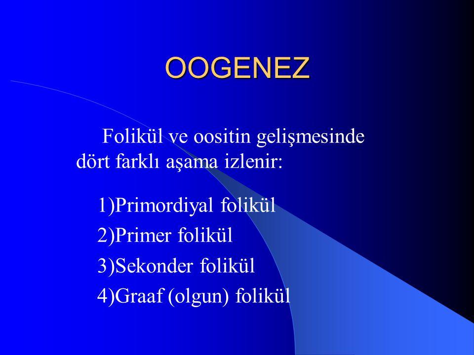 OOGENEZ Folikül ve oositin gelişmesinde dört farklı aşama izlenir:
