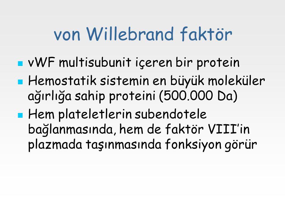 von Willebrand faktör vWF multisubunit içeren bir protein