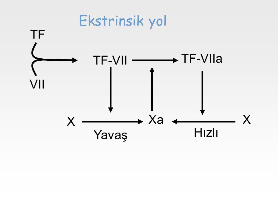Ekstrinsik yol TF TF-VIIa TF-VII VII Xa X X Hızlı Yavaş