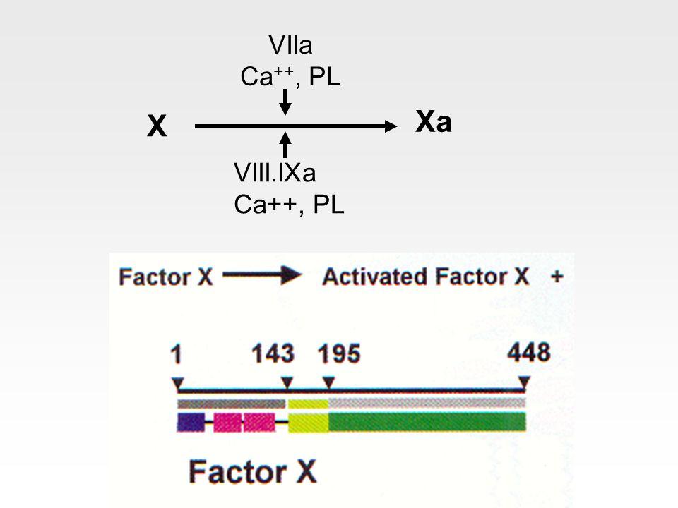 VIIa Ca++, PL X Xa VIII.IXa Ca++, PL
