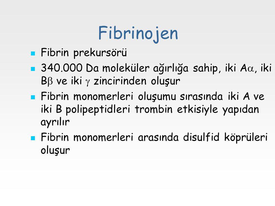 Fibrinojen Fibrin prekursörü