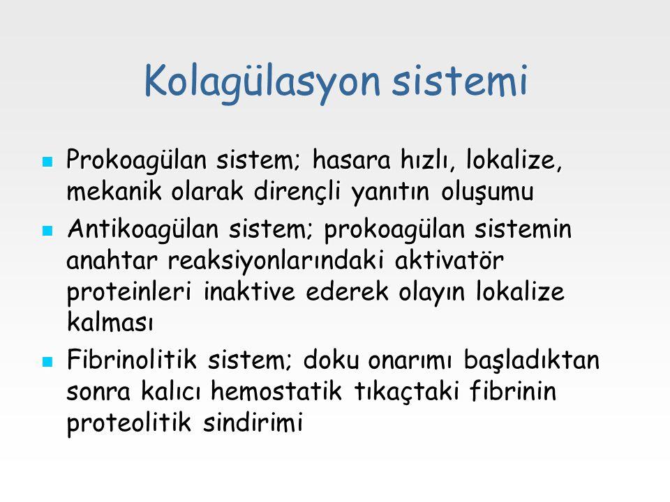 Kolagülasyon sistemi Prokoagülan sistem; hasara hızlı, lokalize, mekanik olarak dirençli yanıtın oluşumu.