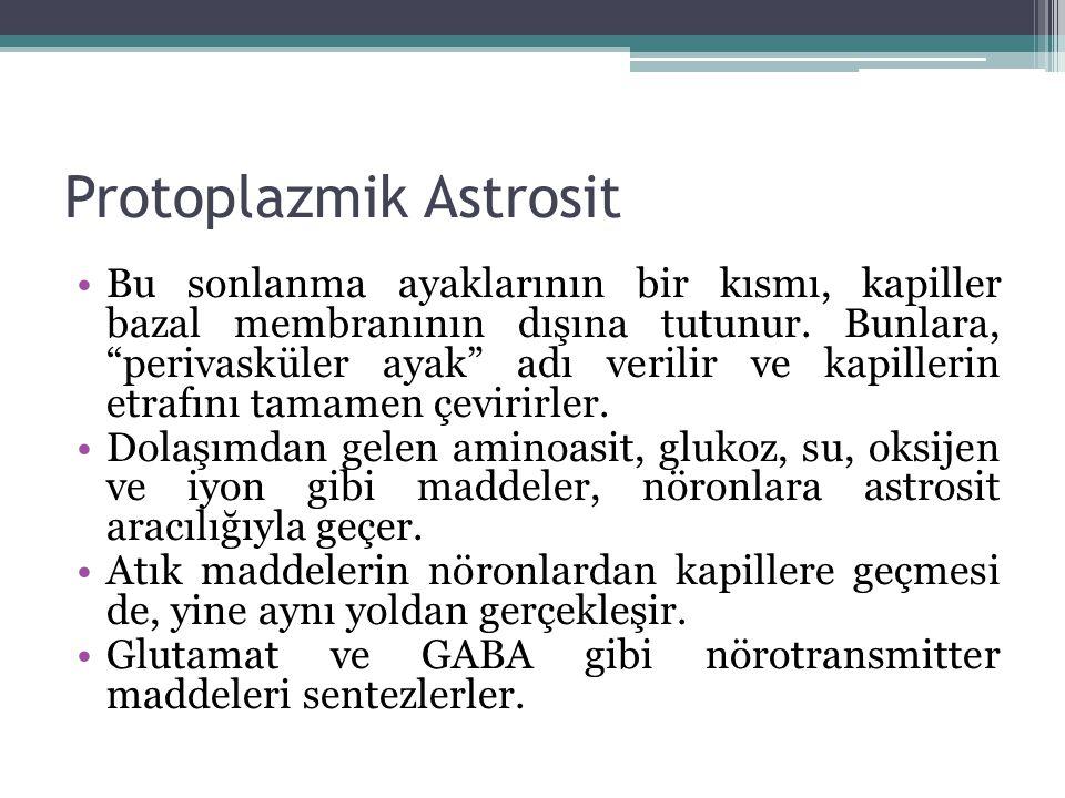 Protoplazmik Astrosit