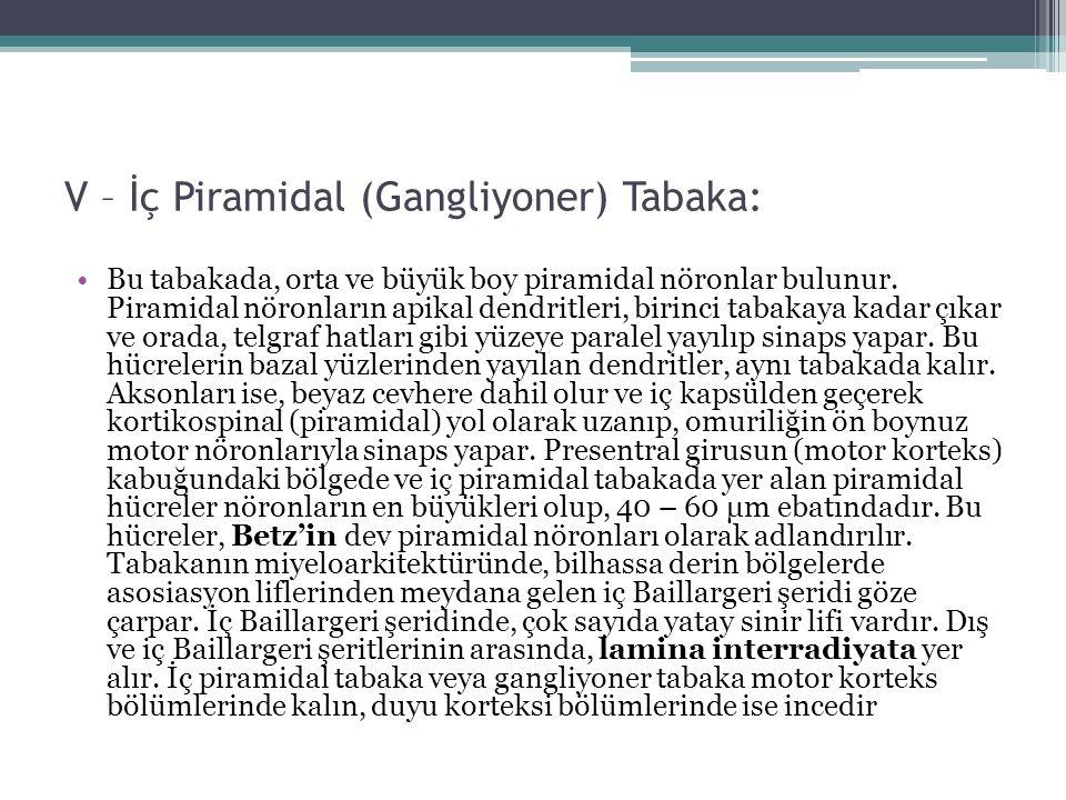 V – İç Piramidal (Gangliyoner) Tabaka: