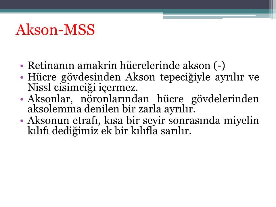 Akson-MSS Retinanın amakrin hücrelerinde akson (-)