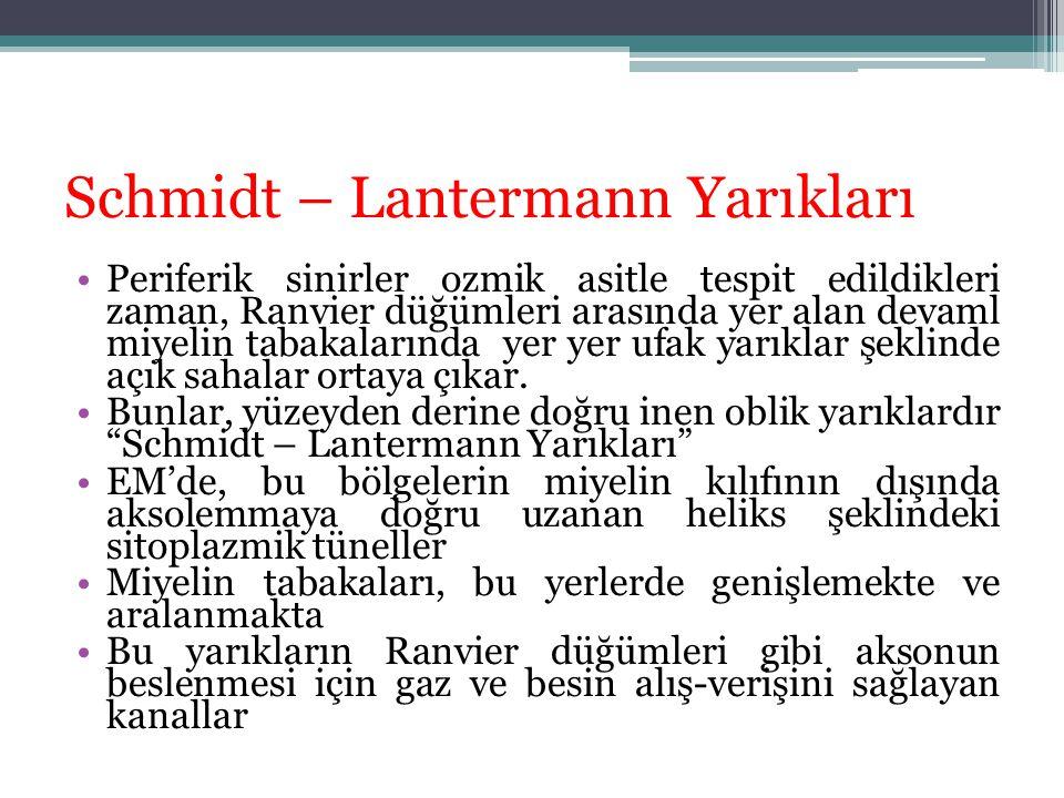 Schmidt – Lantermann Yarıkları
