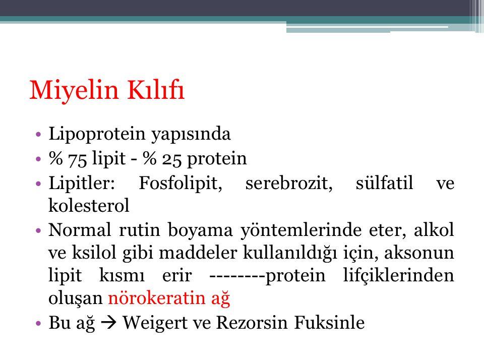 Miyelin Kılıfı Lipoprotein yapısında % 75 lipit - % 25 protein