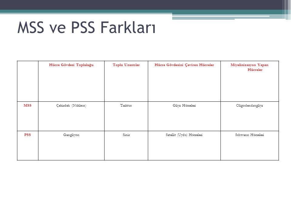 MSS ve PSS Farkları Hücre Gövdesi Topluluğu Toplu Uzantılar