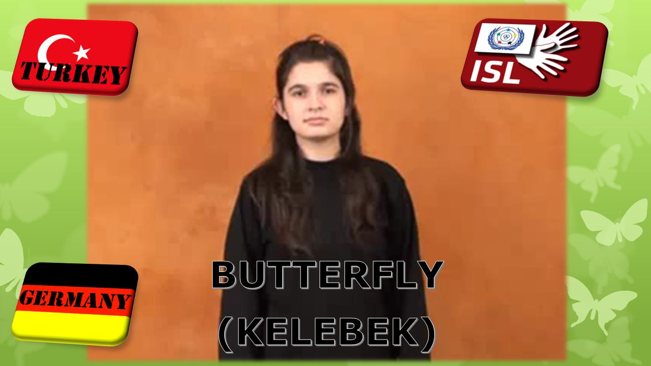 BUTTERFLY (KELEBEK)
