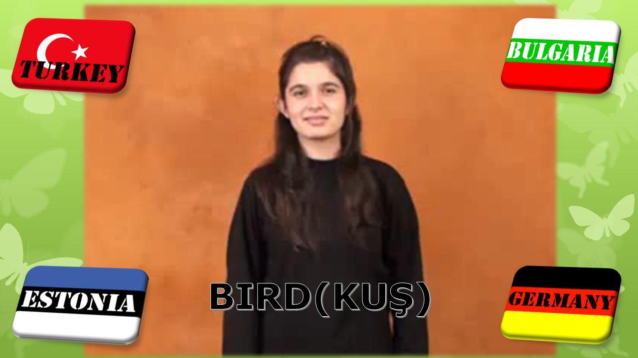 BIRD(KUŞ)
