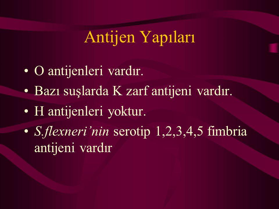 Antijen Yapıları O antijenleri vardır.