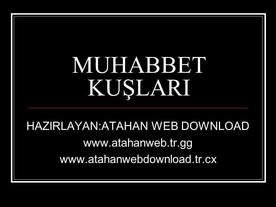 HAZIRLAYAN:ATAHAN WEB DOWNLOAD