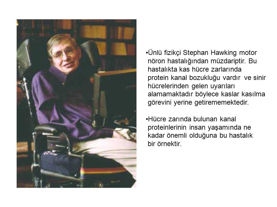 Ünlü fizikçi Stephan Hawking motor