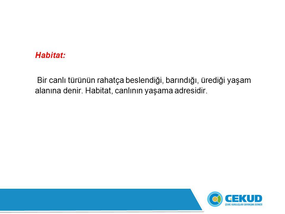 Habitat: Bir canlı türünün rahatça beslendiği, barındığı, ürediği yaşam alanına denir.
