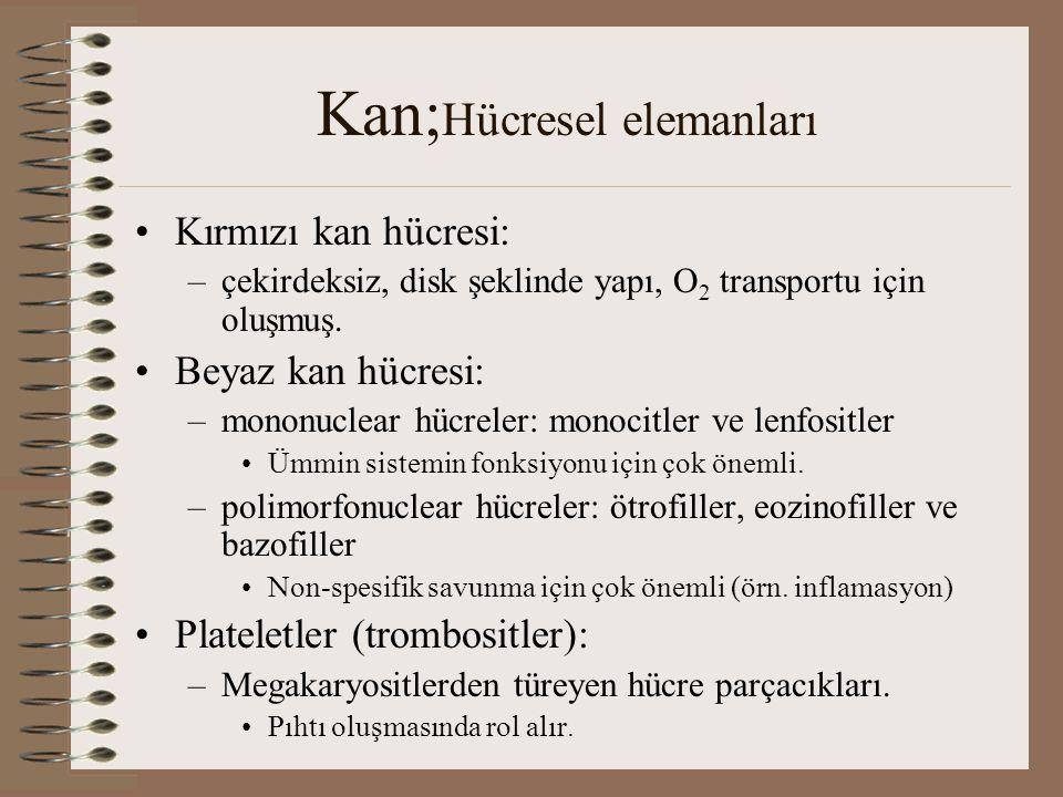 Kan;Hücresel elemanları