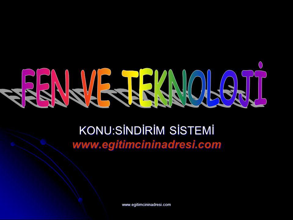 KONU:SİNDİRİM SİSTEMİ www.egitimcininadresi.com