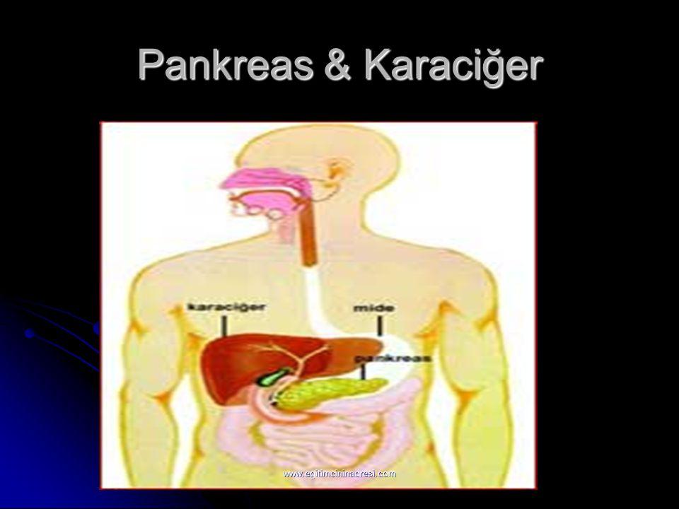 Pankreas & Karaciğer www.egitimcininadresi.com