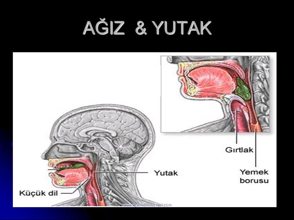 AĞIZ & YUTAK www.egitimcininadresi.com