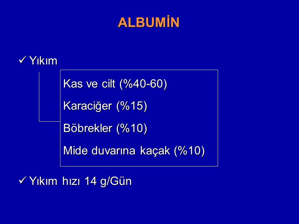 ALBUMİN Yıkım Kas ve cilt (%40-60) Karaciğer (%15) Böbrekler (%10)