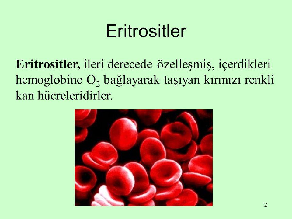 Eritrositler Eritrositler, ileri derecede özelleşmiş, içerdikleri hemoglobine O2 bağlayarak taşıyan kırmızı renkli kan hücreleridirler.