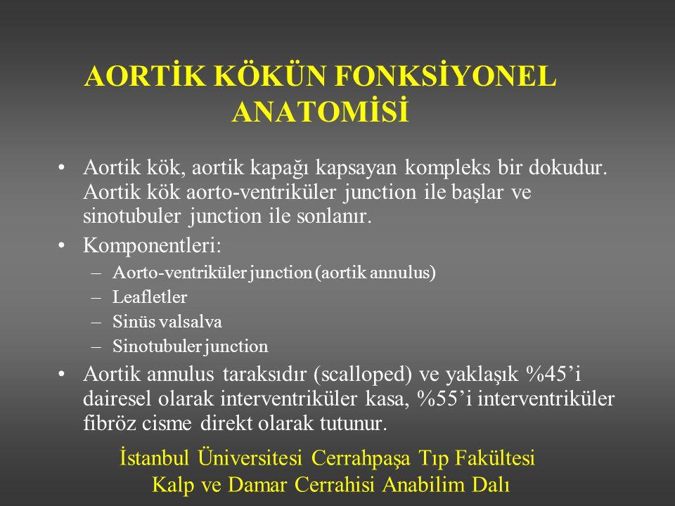AORTİK KÖKÜN FONKSİYONEL ANATOMİSİ