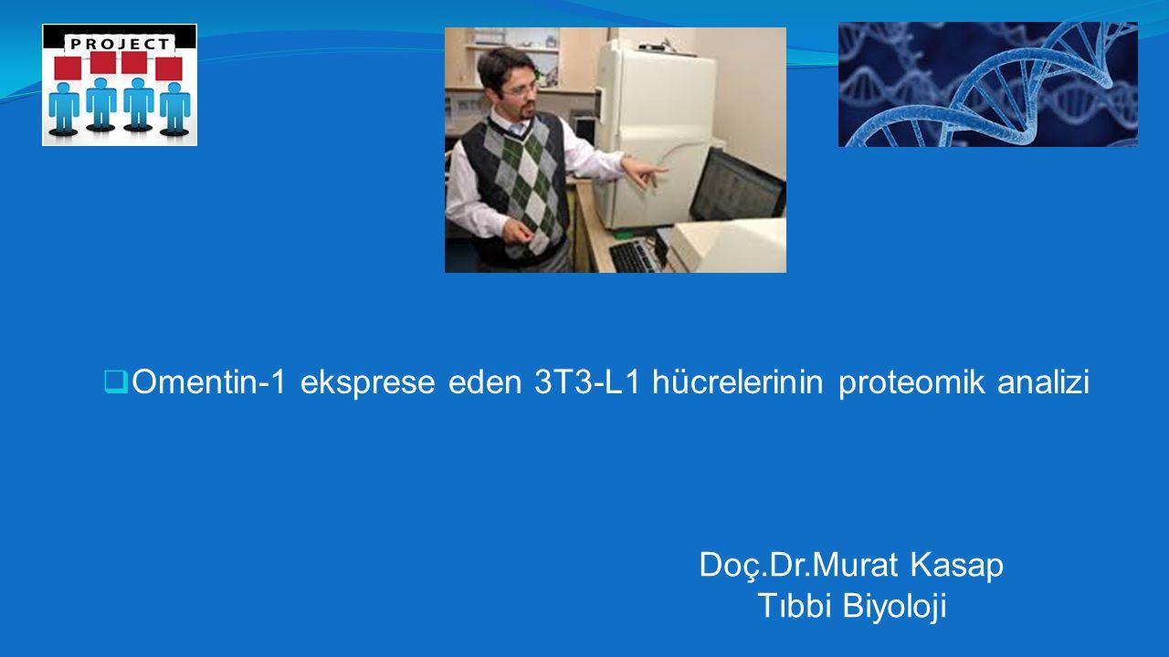 Omentin-1 eksprese eden 3T3-L1 hücrelerinin proteomik analizi