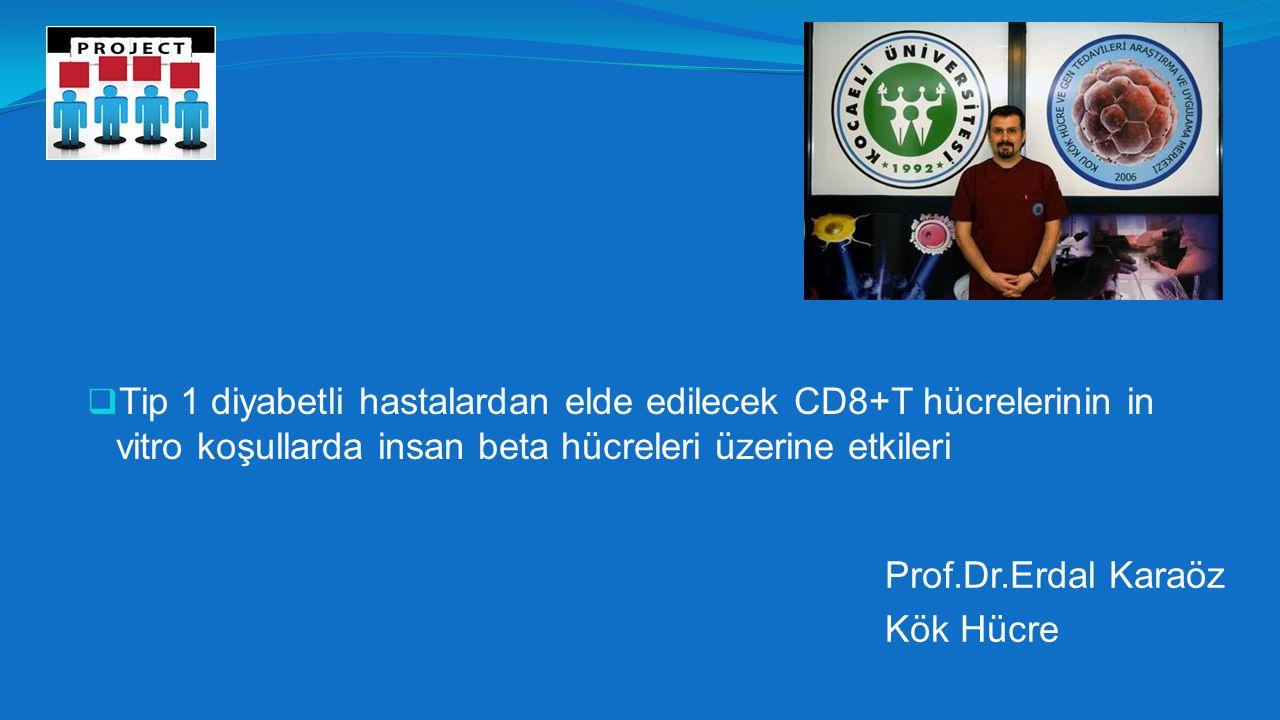 Tip 1 diyabetli hastalardan elde edilecek CD8+T hücrelerinin in vitro koşullarda insan beta hücreleri üzerine etkileri