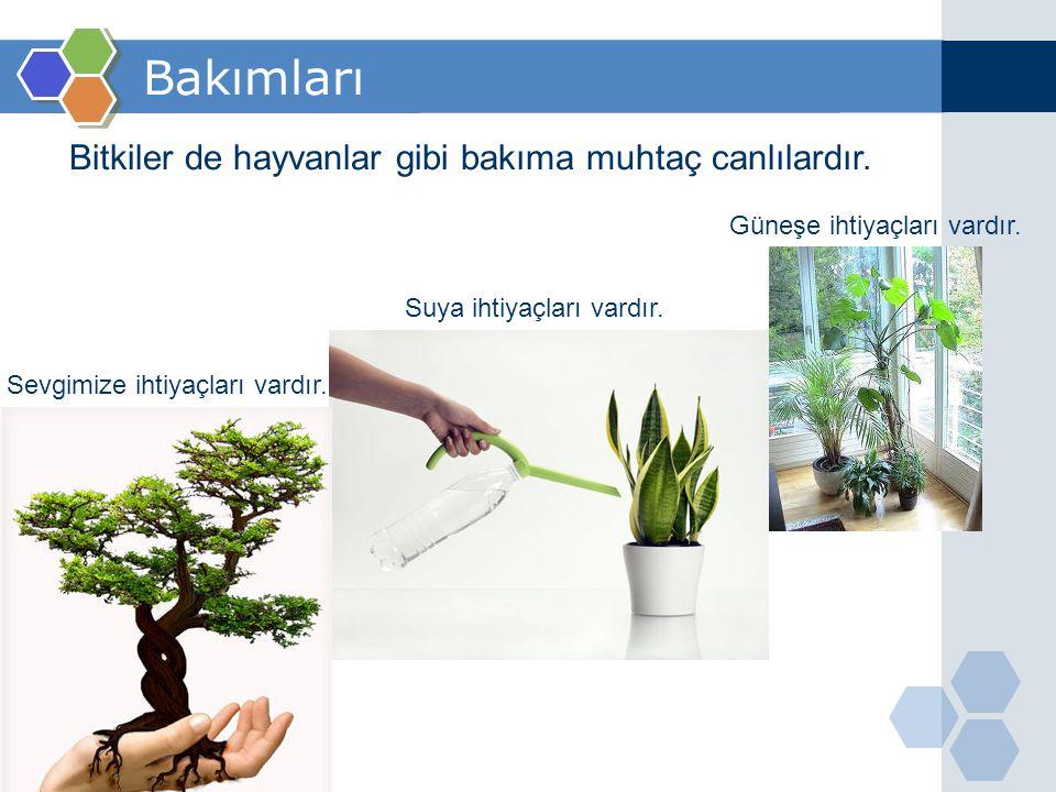 Bakımları Bitkiler de hayvanlar gibi bakıma muhtaç canlılardır.