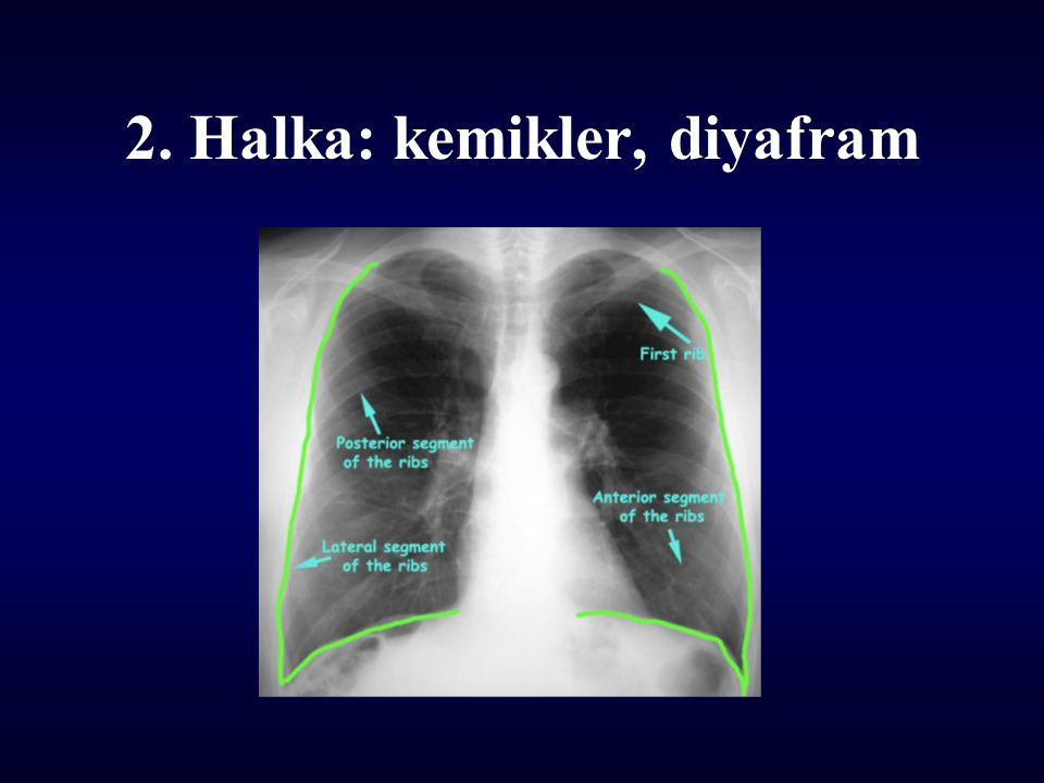 2. Halka: kemikler, diyafram