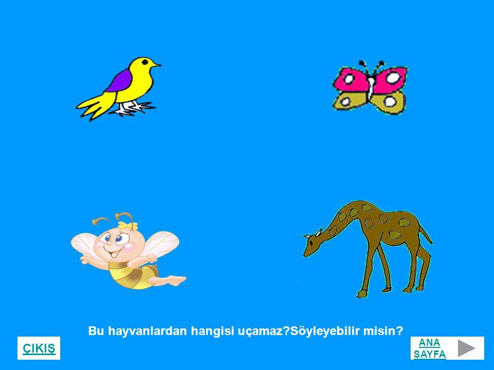 Bu hayvanlardan hangisi uçamaz Söyleyebilir misin