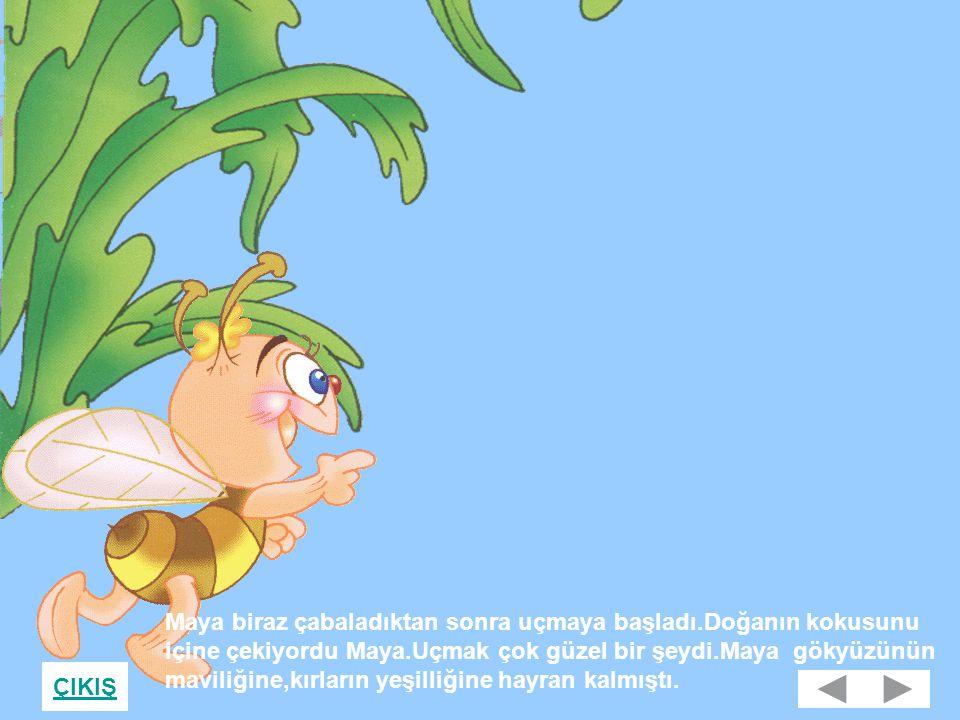 Maya biraz çabaladıktan sonra uçmaya başladı.Doğanın kokusunu