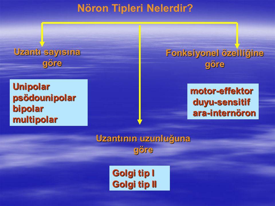 Nöron Tipleri Nelerdir Fonksiyonel özelliğine