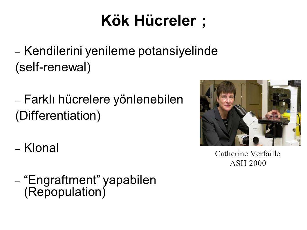 Kök Hücreler ; Kendilerini yenileme potansiyelinde (self-renewal)