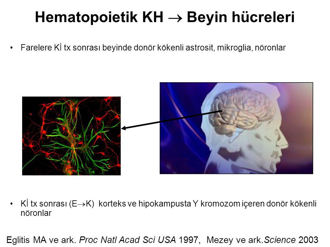 Hematopoietik KH  Beyin hücreleri