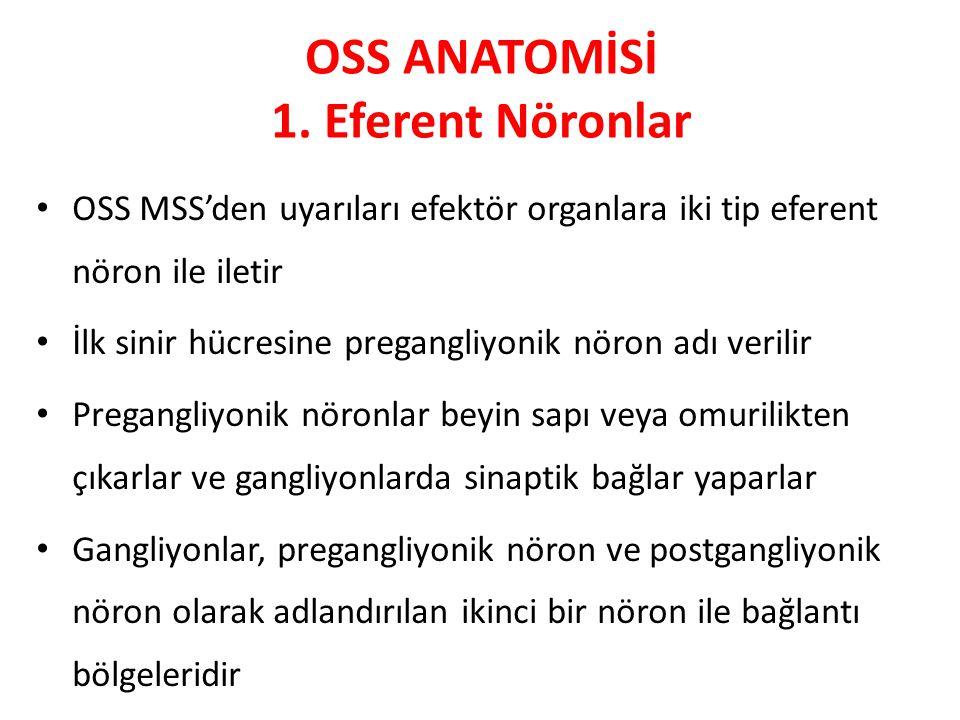 OSS ANATOMİSİ 1. Eferent Nöronlar