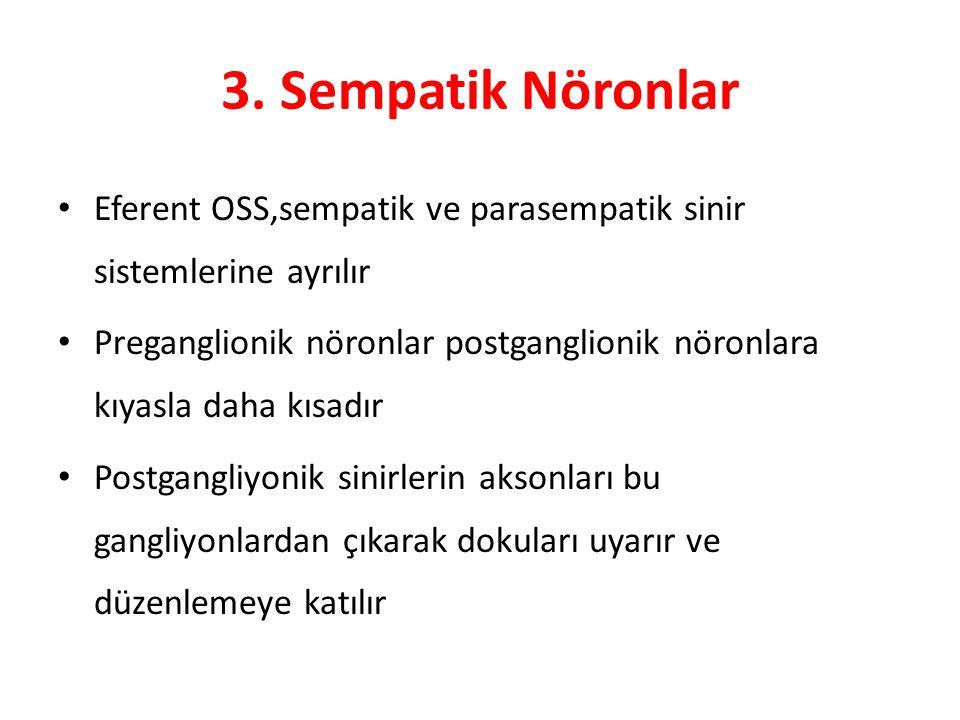 3. Sempatik Nöronlar Eferent OSS,sempatik ve parasempatik sinir sistemlerine ayrılır.