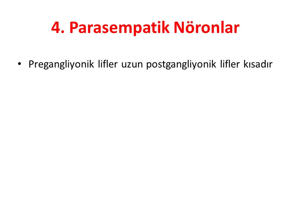 4. Parasempatik Nöronlar