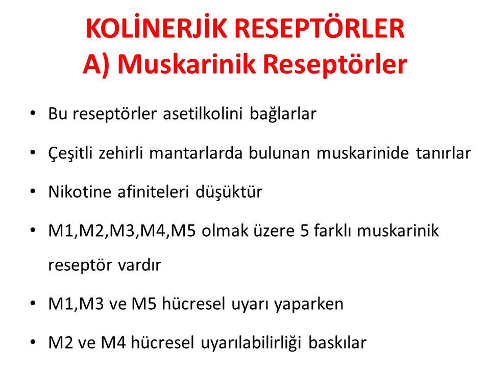 KOLİNERJİK RESEPTÖRLER A) Muskarinik Reseptörler