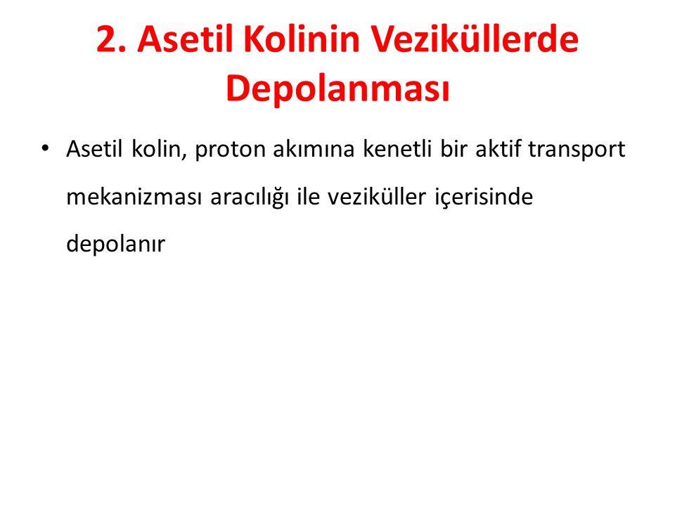 2. Asetil Kolinin Veziküllerde Depolanması