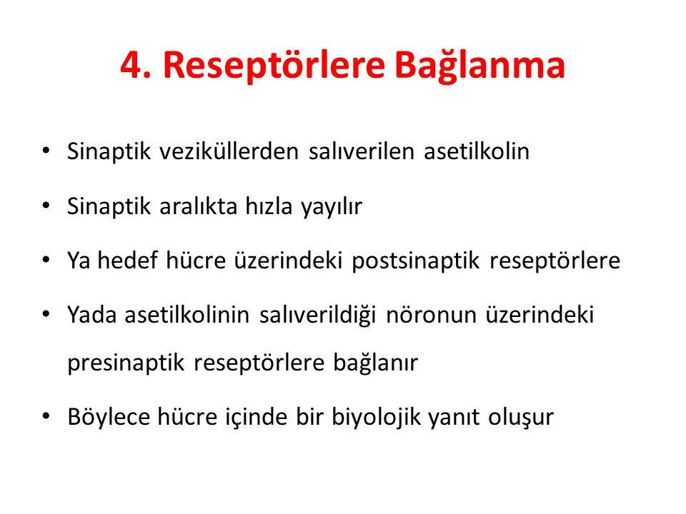 4. Reseptörlere Bağlanma