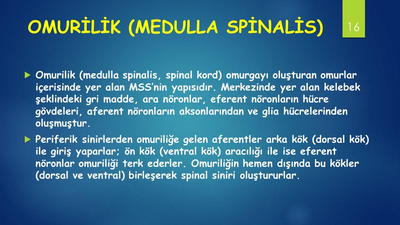 OMURİLİK (MEDULLA SPİNALİS)
