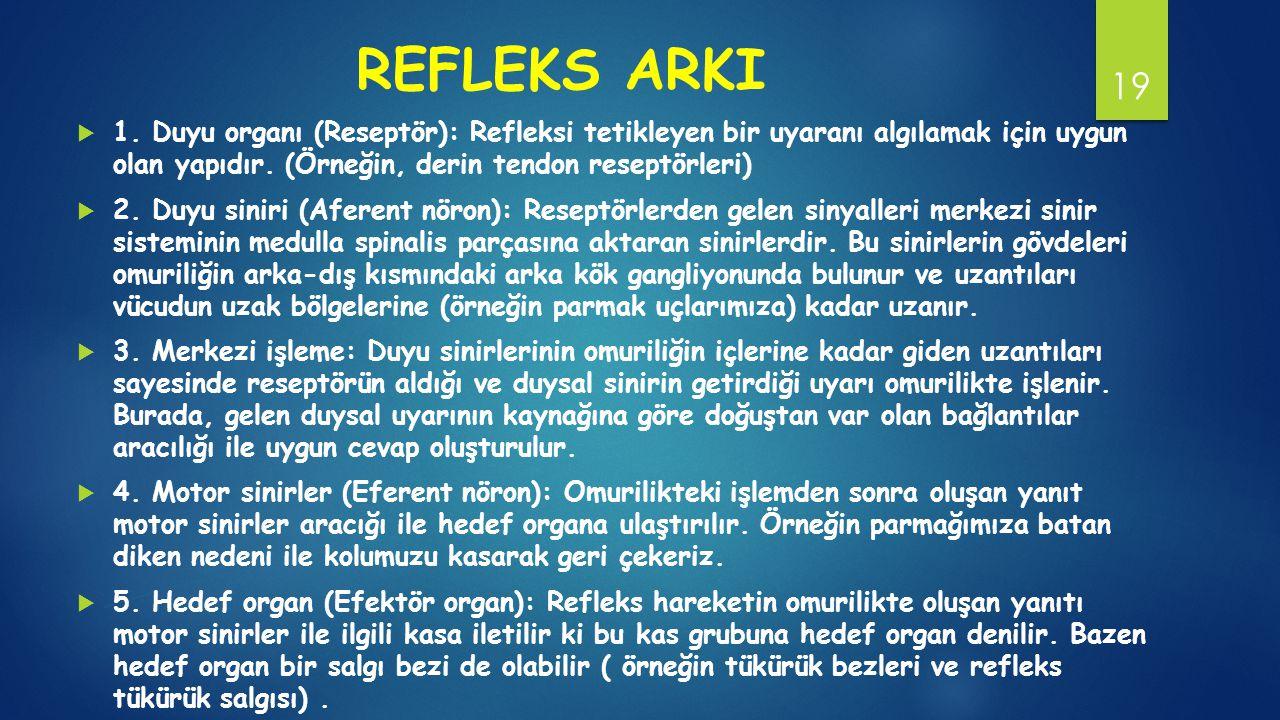 REFLEKS ARKI 1. Duyu organı (Reseptör): Refleksi tetikleyen bir uyaranı algılamak için uygun olan yapıdır. (Örneğin, derin tendon reseptörleri)
