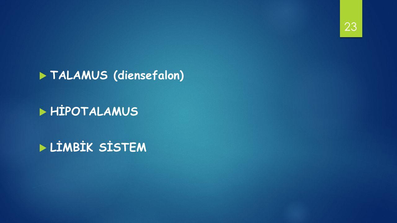 TALAMUS (diensefalon)