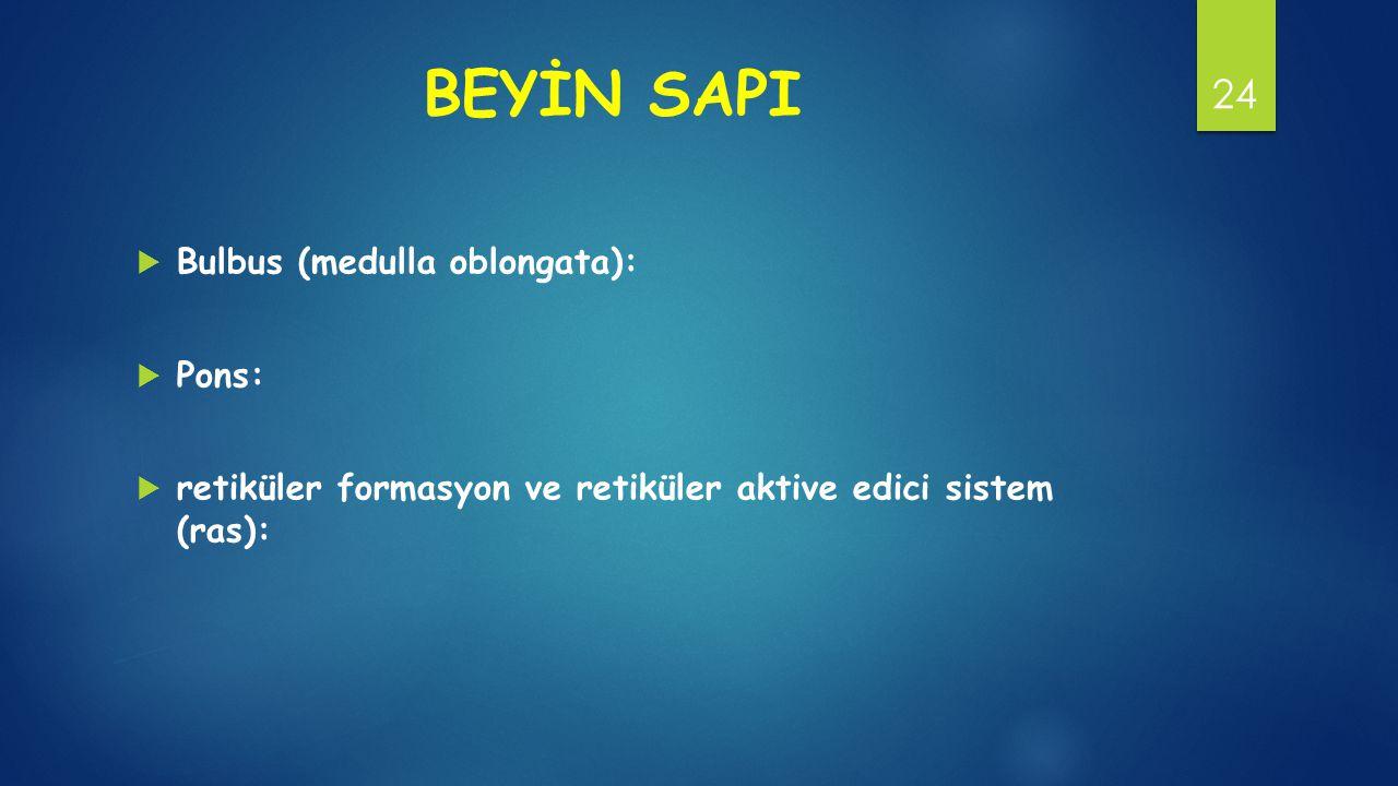 BEYİN SAPI Bulbus (medulla oblongata): Pons: