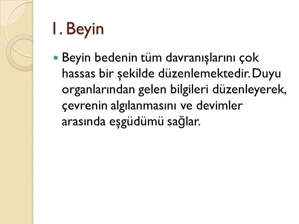 1. Beyin