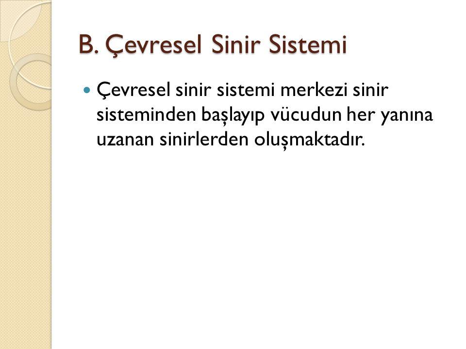 B. Çevresel Sinir Sistemi