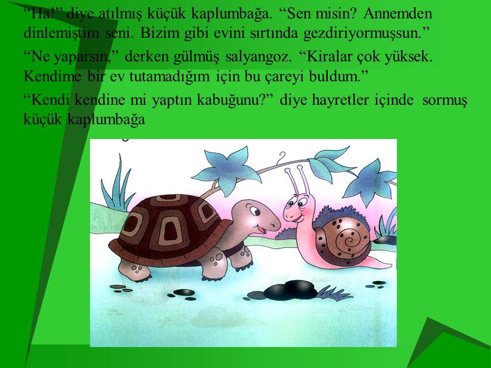 Ha. diye atılmış küçük kaplumbağa. Sen misin