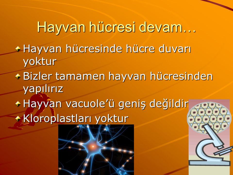 Hayvan hücresi devam… Hayvan hücresinde hücre duvarı yoktur