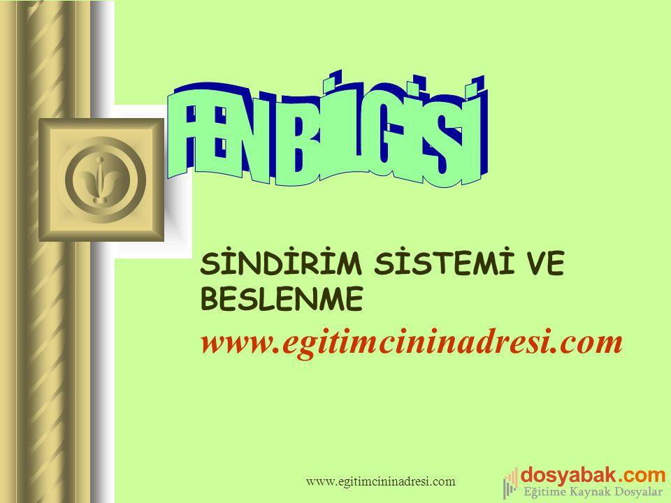 SİNDİRİM SİSTEMİ VE BESLENME www.egitimcininadresi.com