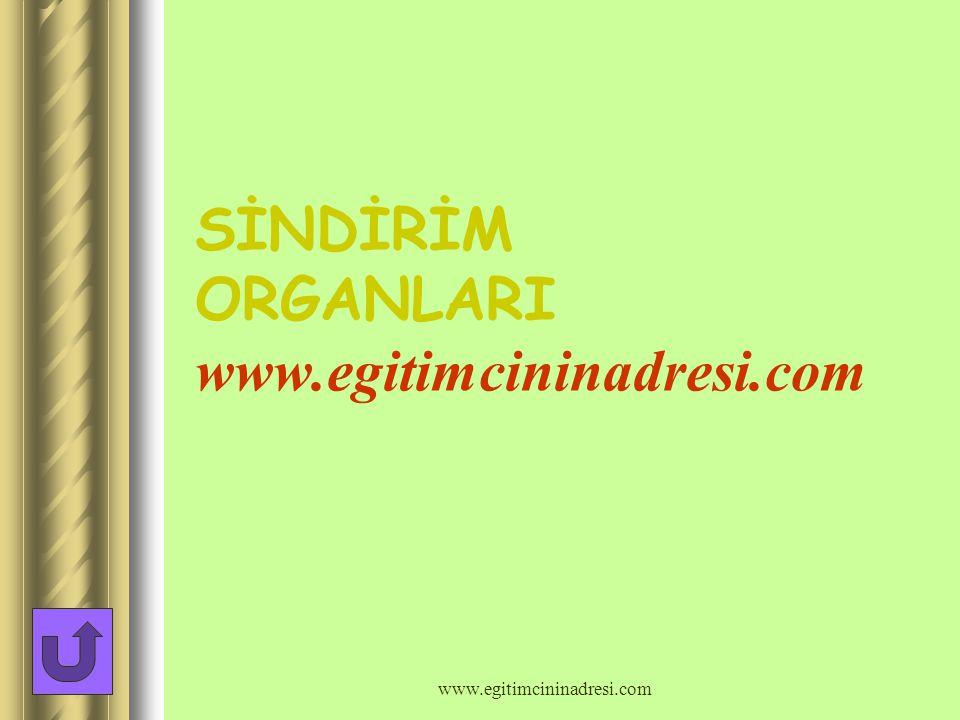 SİNDİRİM ORGANLARI www.egitimcininadresi.com